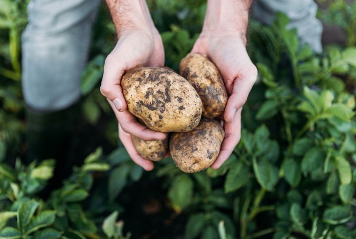 Удобрение картошки