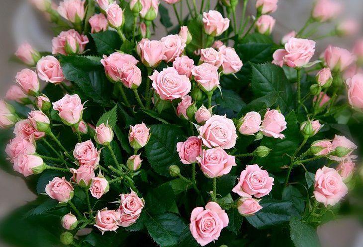 Мелкие розы