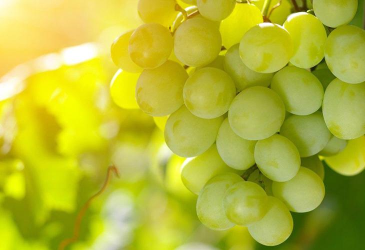Виноград Супер–Экстра