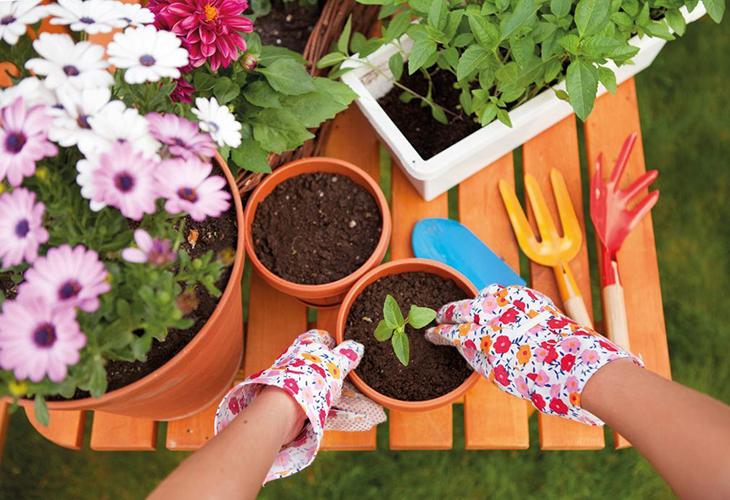 Пересадка садовых цветов в горок