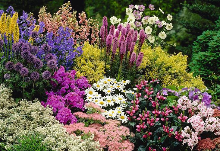 Высокие цветы