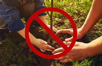 Не сажать деревья