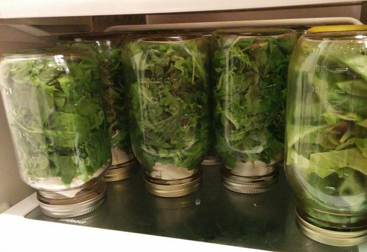 Консервирование листьев салата