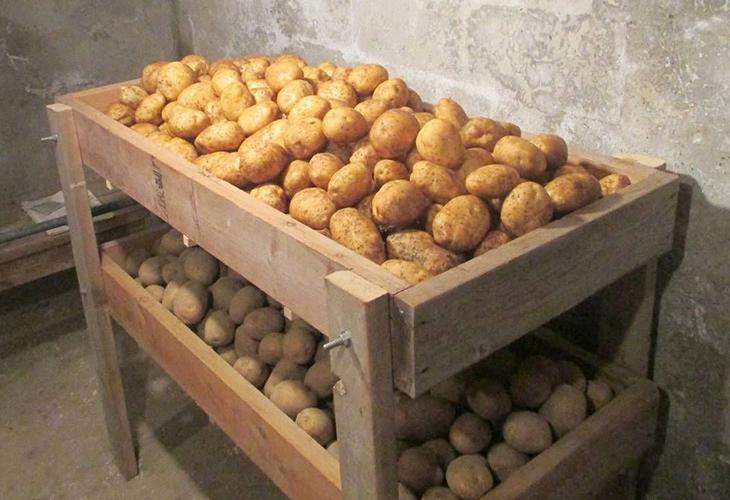 Место хранения картофеля