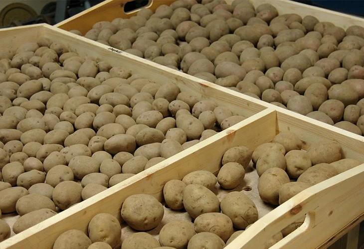 Соседство с картофелем