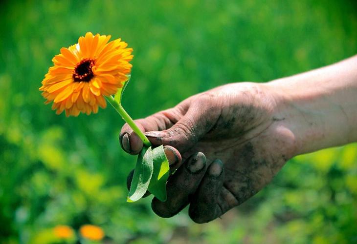 Руки после работы в огороде