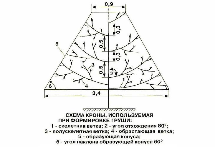 Осенняя обрезка груши пирамидой