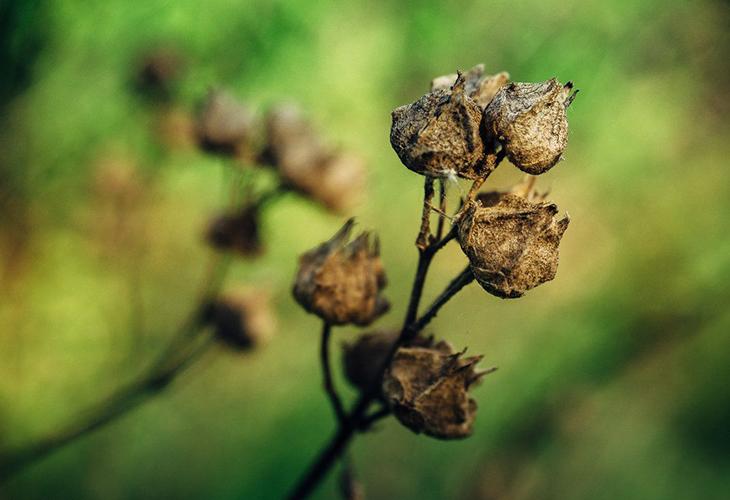 Семенные коробочки цветов