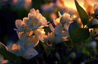 Ночные цветы