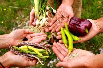 Сбор семян из овощей