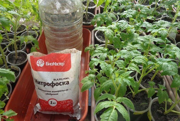 Удобрение томатов нитрофоской