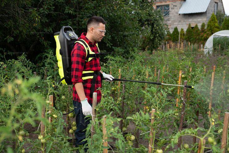 Опрыскивание огорода