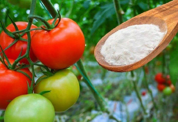 Сода для подкормки растений