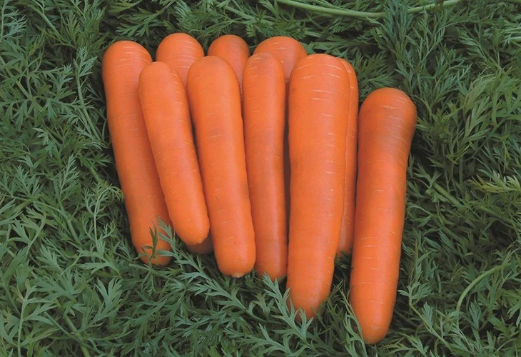 Морковь Детская сладкая
