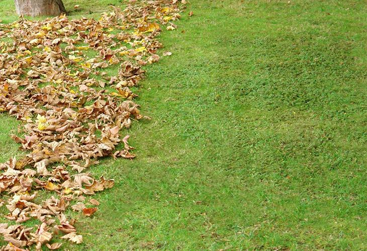Газон осенью