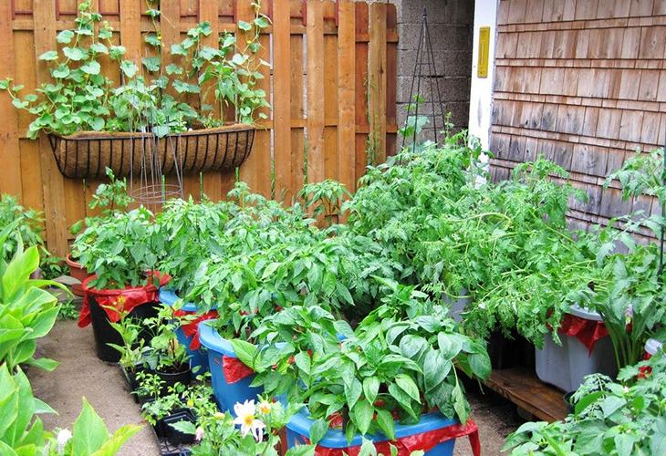 Огород в контейнерах