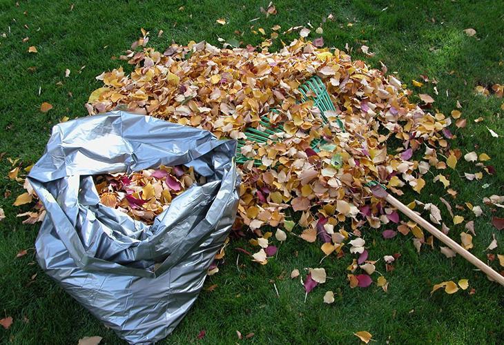 Сбор листвы в саду