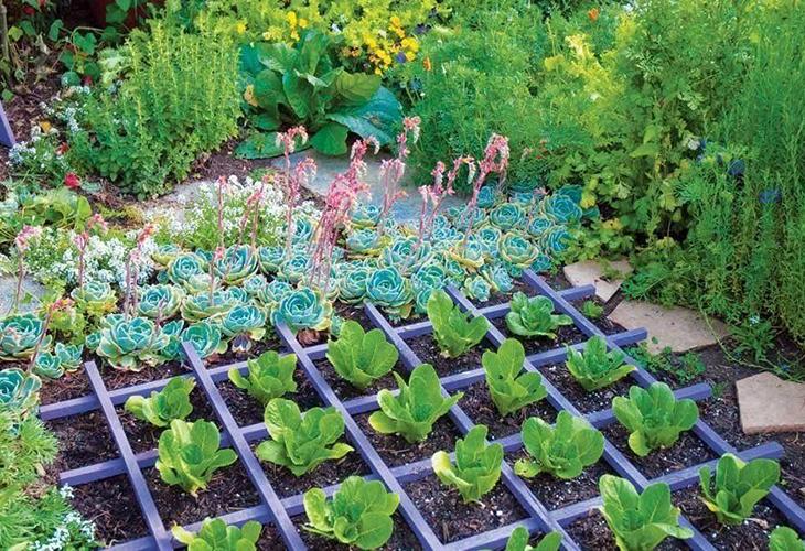 Соседство овощей на огороде