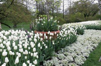 Белые цветы на клумбе