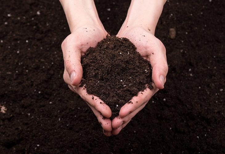 Выбор земли для рассады