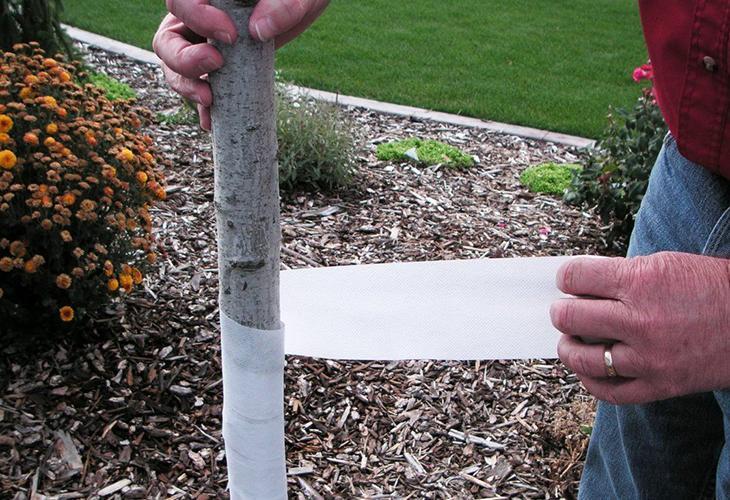 Обмотка садовым бинтом