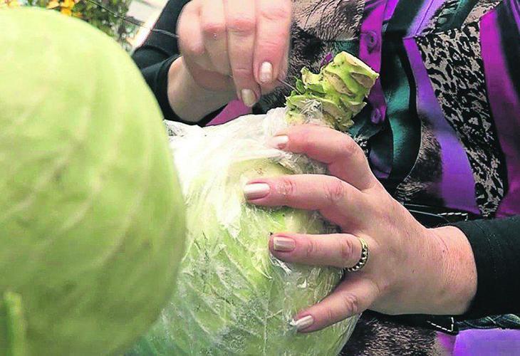 Хранение капусты - подготовка