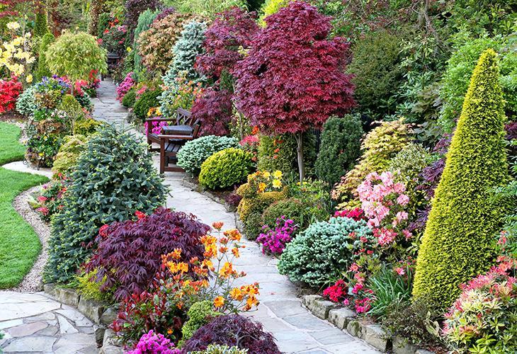 Декоративные растения для сада