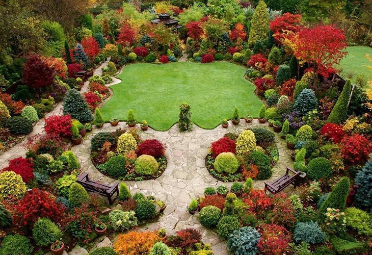 Деревья и кустарники для сада