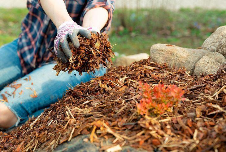 Использование опилок в саду
