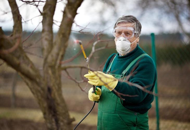 Подготовка к обработке малины