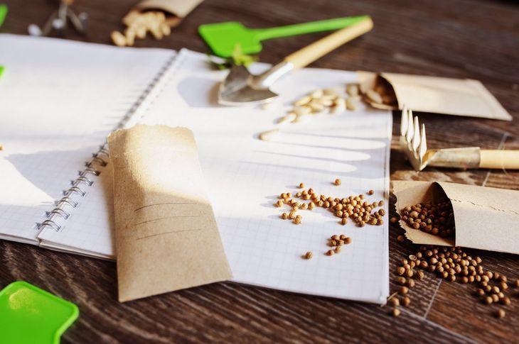 Правила стратификации семян
