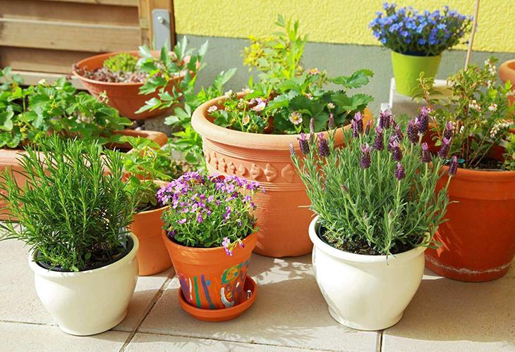 Садовые цветы в помещении