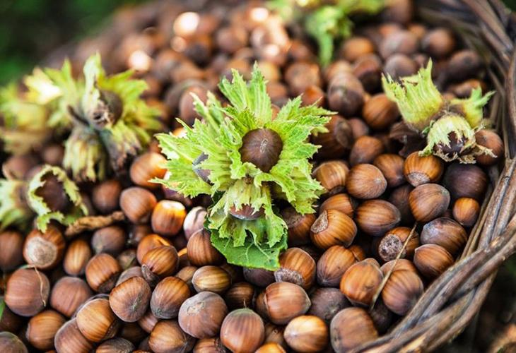 Орехи на даче