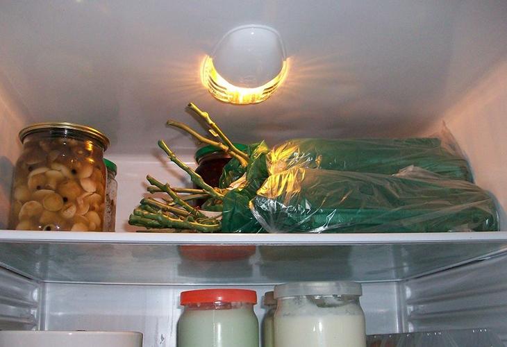 Хранение саженцев в холодильнике