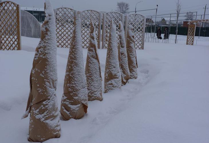 Бумага для защиты хвойных зимой