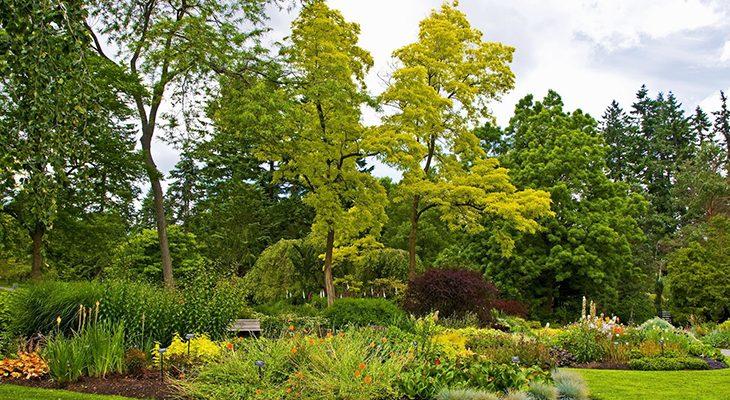 Лесные деревья в саду