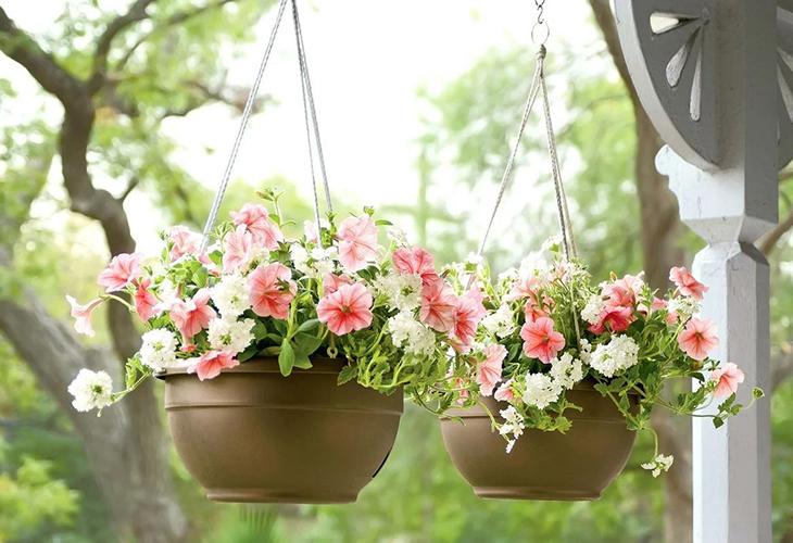 Подвесной сад в кашпо
