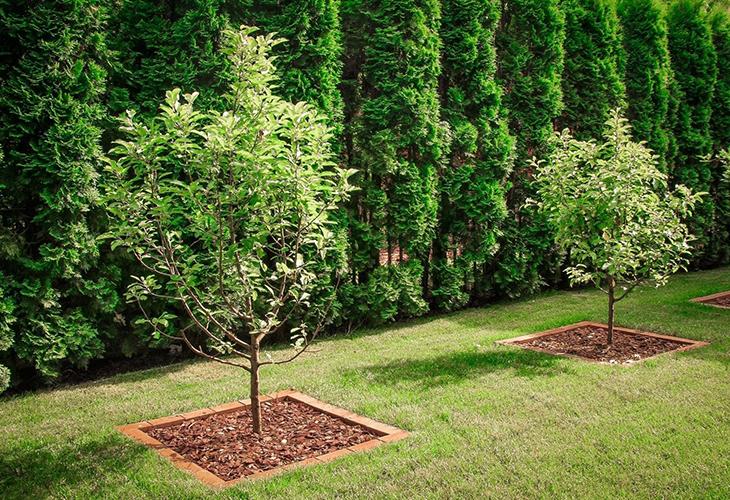 Подходящая схема расположения деревьев
