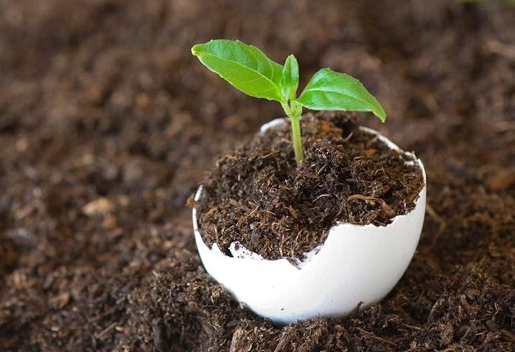 использование яичной скорлупы на огороде