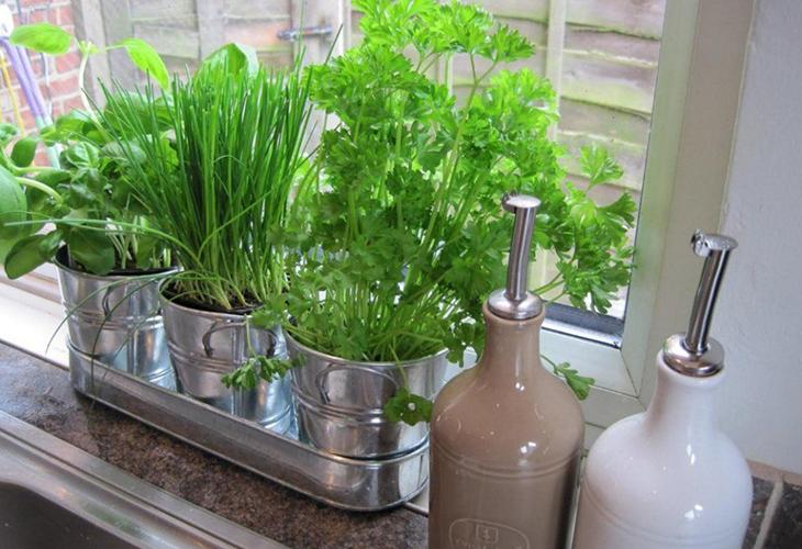 Влажность воздуха для комнатного огорода