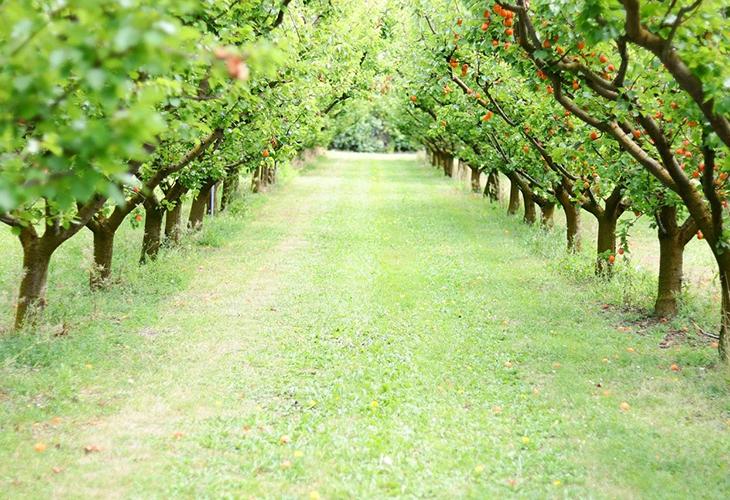 Участок под фруктовый сад