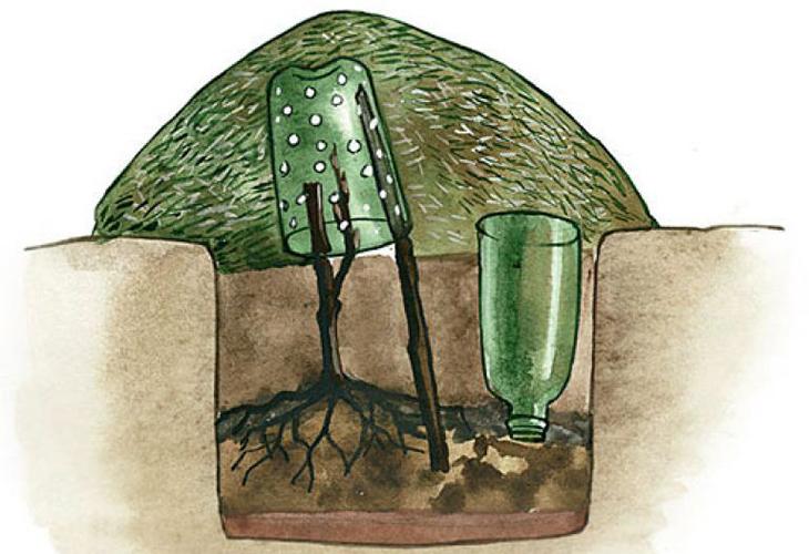 Как укрыть виноград пластиковыми бутылками