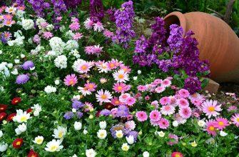 Цветы на огороде