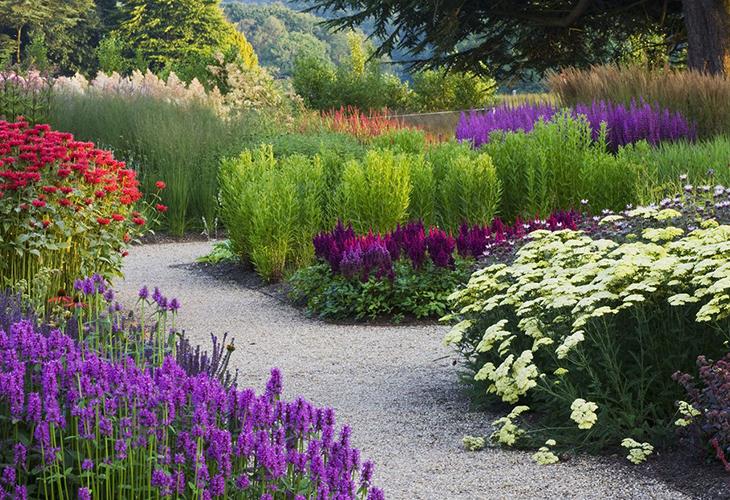 Неприхотливые цветы на огороде