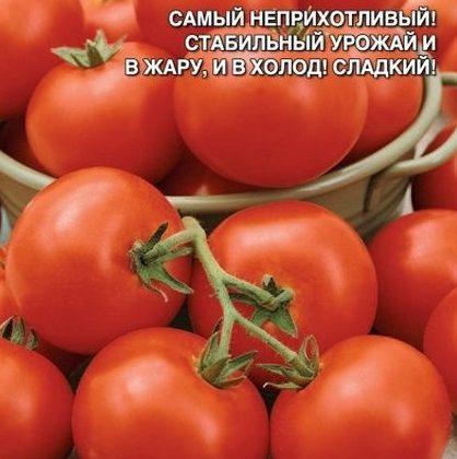 Томат Челябинский метеорит — характеристика и описание среднеспелого сорта