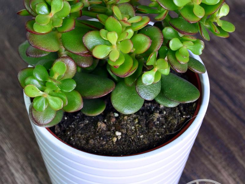9 комнатных растений, опасных для здоровья кошек