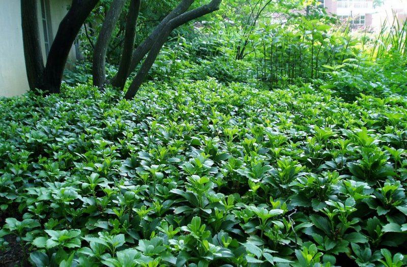 10 многолетних декоративных растений для посадки на приусадебном участке