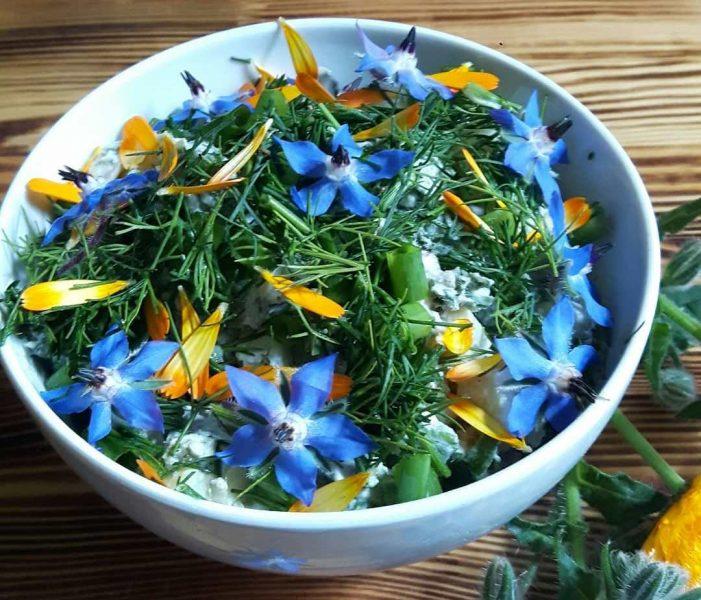 Бурачник или огуречная трава: лечебные свойства, применение в кулинарии