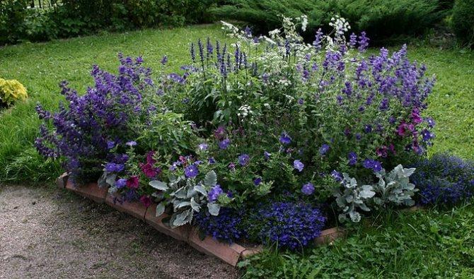 Монохромный сад в ландшафтном дизайне