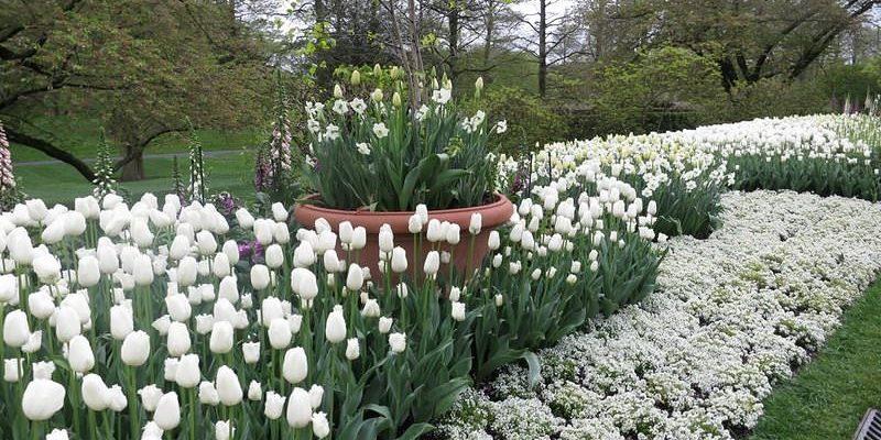 Монохромный сад в ландшафтном дизайне белого цвета